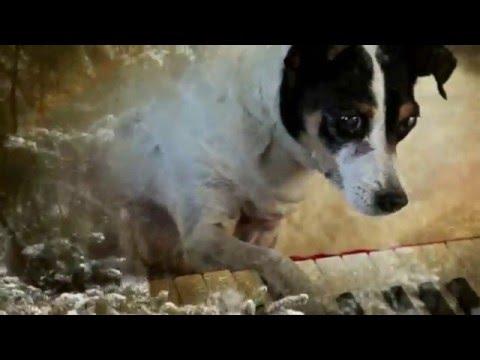 HEART OF A DOG Trailer (deutsch/german)