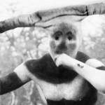 Der Perlmuttknopf - El Botón de Nácar